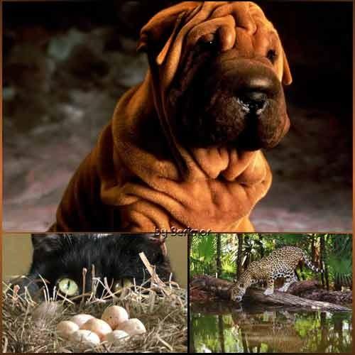 Фото разных и cмешных животных