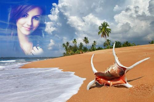 Фоторамка - Морская раковина на пляже