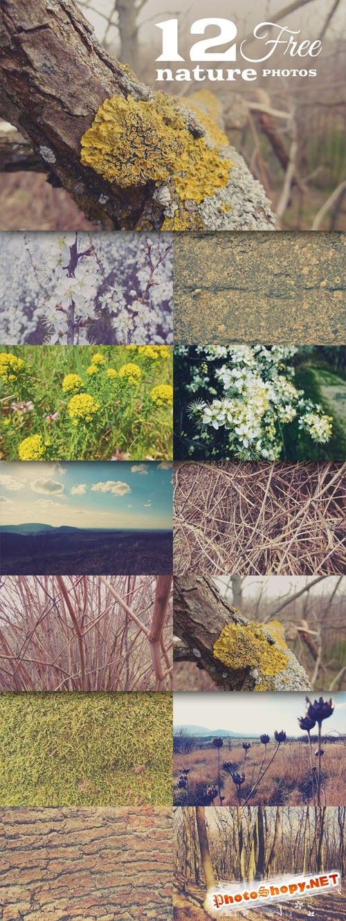12 Quality Nature Photos Textures Vol.2