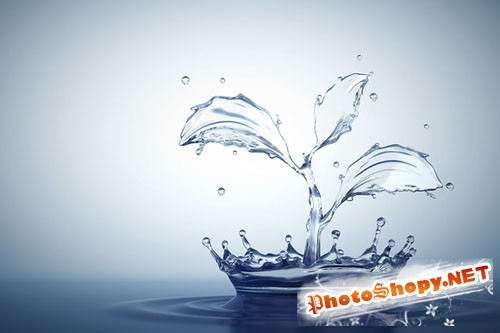 Water splash in form of plant - Creativemarket 127313