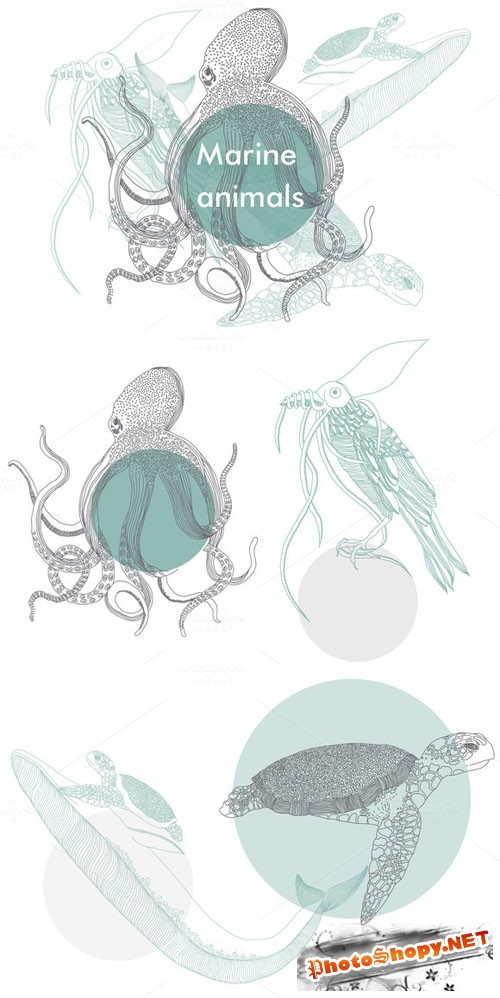 Marine animals Creativemarket 51032