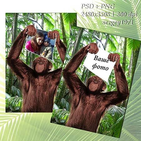 Фоторамка - Фотография в лапах обезьяны