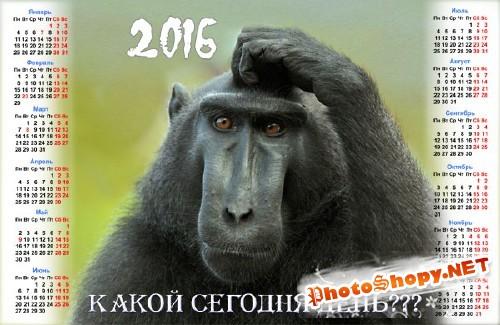 Календарь 2016 - Задумчивая обезьяна