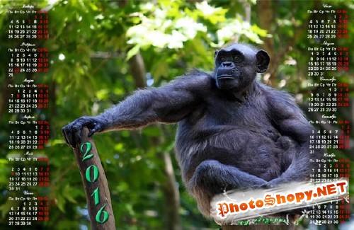 Красивый календарь - Шимпанзе на ветке