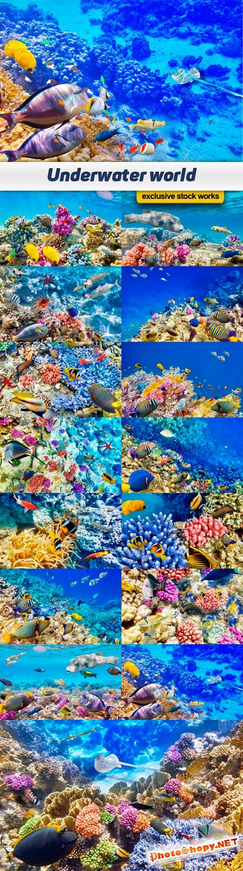 Underwater world - 15 UHQ JPEG
