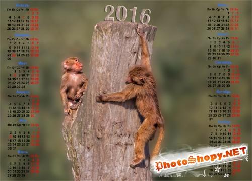 На 2016 год календарь - Две обезьяны на пеньке