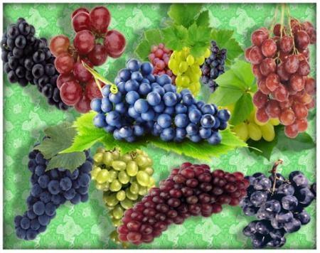 Png на прозрачном фоне - Виноградные кисти