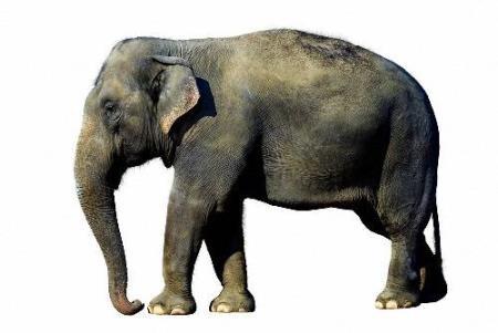 Необходимый набор клипартов на прозрачном фоне - Слоны и мамонты