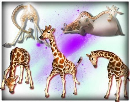 Растровый клипарт - Смешные жирафы