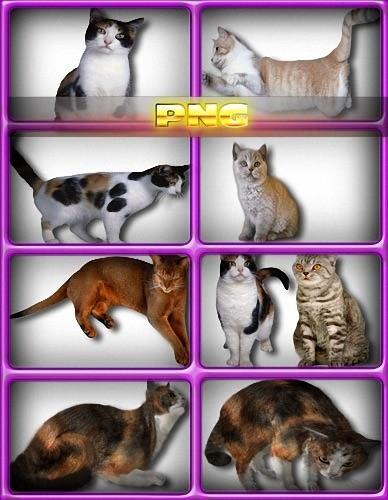 Клипарт прозрачный - Коты и кошки
