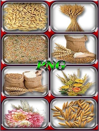 Качественные клипарты - Пшеница, зерна