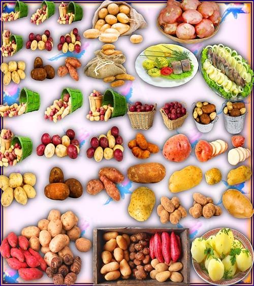 Клип-арты для фотошопа на прозрачном фоне - Вкусный картофель