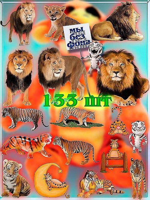 Фотошоп Png клип-арты - Львы и тигры
