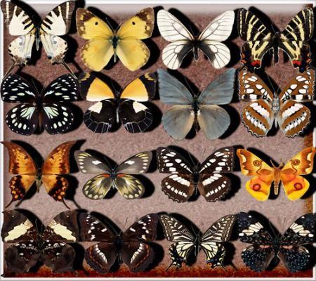 Прозрачные клипарты для фотошопа - Бабочки разных видов